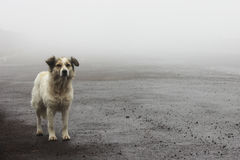 Homeless stray dog waiting on the road. On a foggy day Royalty Free Stock Photos