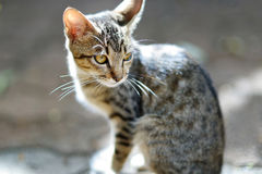 Homeless stray kitten with yellow eyes Royalty Free Stock Photos