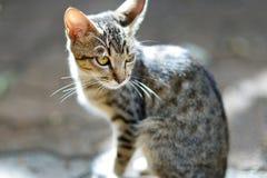Homeless stray kitten with yellow eyes Royalty Free Stock Photos