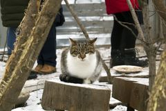 Homeless street angry cat sitting on a stump in winter with people in background stock images