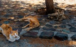 Homeless three cats of Ð¡yprus royalty free stock photography