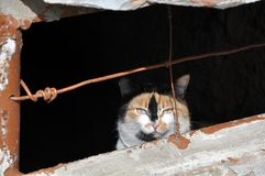 Light-eyed stray cat hiding in the cellar royalty free stock photography