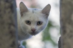 Homeless white cat looks out of hiding. Pets Stock Photo