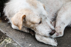 The homeless white dog on side street Stock Photo