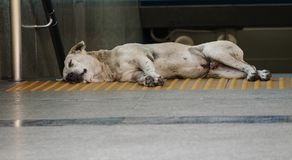 Homeless dog sleeping on the ground. Homeless white dog sleeping on the ground in front of sub way exit Royalty Free Stock Photos