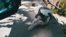 Homeless White with Gray Cat Sleeps on the Street stock video footage