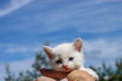 Homeless white kitten in the girl`s hand. Blue sky on the background. Blue eyes of a kitten. A homeless white kitten in the girl`s hand. Against the blue sky stock images
