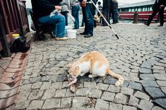 A homeless white-red cat eats fish caught by fishermen. A homeless white-red cat eats fish on the street caught by fishermen royalty free stock images