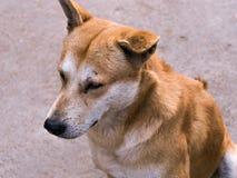 Homelessness dog Stock Images