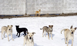 Homelessness dogs. Group of homelessness dogs 1 Stock Photo