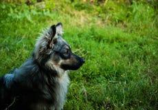 Homely dog stock photos