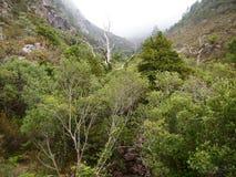 Homem河的谷, Peneda-Gerês国家公园在北葡萄牙 库存图片