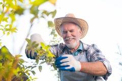 Homem aposentado agradável feliz que trabalha no jardim fotos de stock royalty free