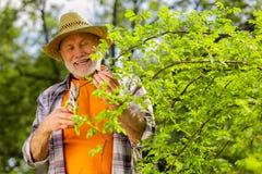 Homem aposentado de irradiação que obtém a satisfação ao cortar ramos foto de stock royalty free