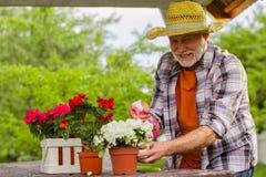 Homem aposentado farpado que obtém a satisfação quando plantas molhando fotografia de stock royalty free