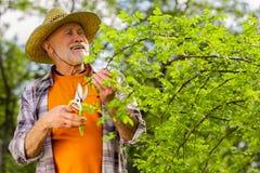 Homem aposentado farpado que veste o t-shirt alaranjado que corta ramos imagens de stock