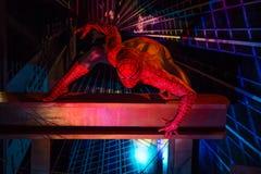 Homem-aranha Fotografia de Stock