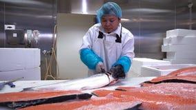 Homem asiático que corta uma faixa dos salmões na tabela na fábrica dos peixes Tiro da zorra filme