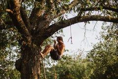 Homem aventuroso novo que escala acima uma árvore de cereja foto de stock