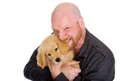 Homem calvo que morde a orelha de um cão de filhote de cachorro Fotos de Stock Royalty Free