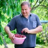 Homem com as cerejas no jardim imagens de stock royalty free