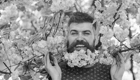 Homem com barba e bigode na cara feliz perto dos ramos com as flores cor-de-rosa macias Moderno com a flor de sakura na barba fotos de stock royalty free