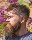 Homem com barba e bigode na cara restrita perto das flores no dia ensolarado O moderno aprecia a mola perto da flor violeta beard imagem de stock royalty free