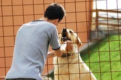 Homem com cão Fotos de Stock Royalty Free
