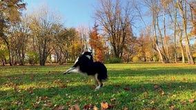 Homem com o cão no parque vídeos de arquivo
