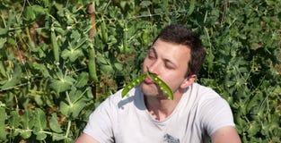 Homem com os bigodes de Pea Pod Like um e foto de stock royalty free