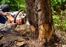 Homem com a serra de cadeia que corta a árvore Fotos de Stock Royalty Free