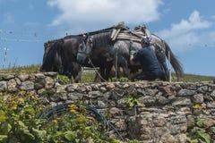 Homem com seus cavalos da montanha na cabana de Eho Os cavalos servem para transportar fontes e à cabana imagem de stock royalty free