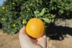 Homem com uma laranja em sua mão fotografia de stock
