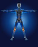 homem 3D médico com esqueleto Fotos de Stock Royalty Free
