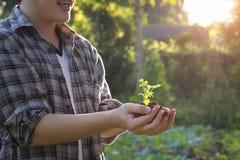 Homem da agricultura da planta do bebê disponível Fotos de Stock Royalty Free