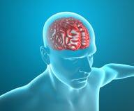 Homem da cabeça da anatomia do cérebro, raio X ilustração stock