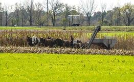 Homem de Amish apenas com os 5 cavalos que colhem a colheita fotos de stock