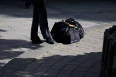 Homem de negócio e seu saco Imagem de Stock Royalty Free