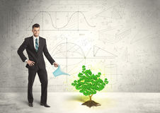 Homem de negócio que molha uma árvore verde crescente do sinal de dólar Fotografia de Stock Royalty Free
