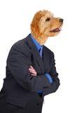 Homem de negócios com braços e cabeça de cão cruzados Fotos de Stock