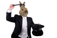 Homem de negócios com braços e cabeça de cão cruzados Fotografia de Stock Royalty Free