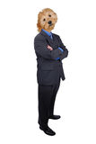 Homem de negócios com braços e cabeça de cão cruzados fotos de stock royalty free