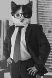 Homem de negócios do gato Imagem de Stock Royalty Free
