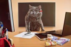 Homem de negócios do gato com vidros no table2 Fotos de Stock Royalty Free