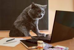 Homem de negócios do gato na tabela no escritório Fotografia de Stock Royalty Free