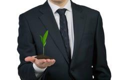 Homem de negócios que guarda uma planta Foto de Stock