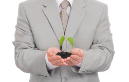 Homem de negócios que mantem a planta verde isolada fotografia de stock royalty free