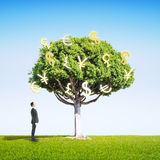 Homem de negócios que olha a árvore do dinheiro Imagens de Stock