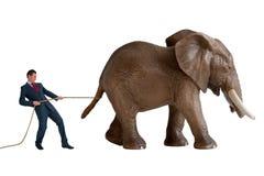 Homem de negócios que tenta conter um elefante imagens de stock royalty free