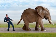 Homem de negócios que tenta conter um elefante foto de stock